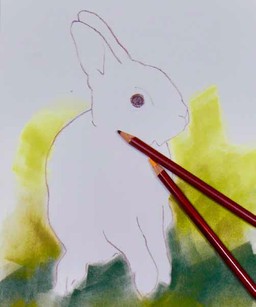 Een konijn tekenen: kopiëren mag!