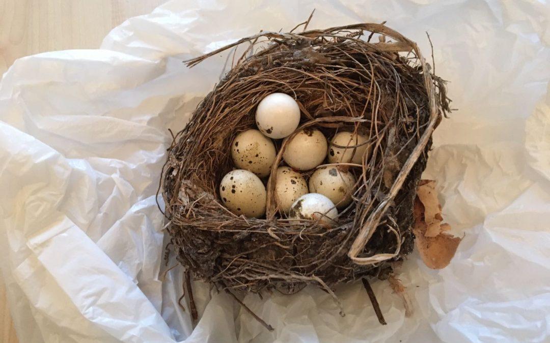Nestje met eieren